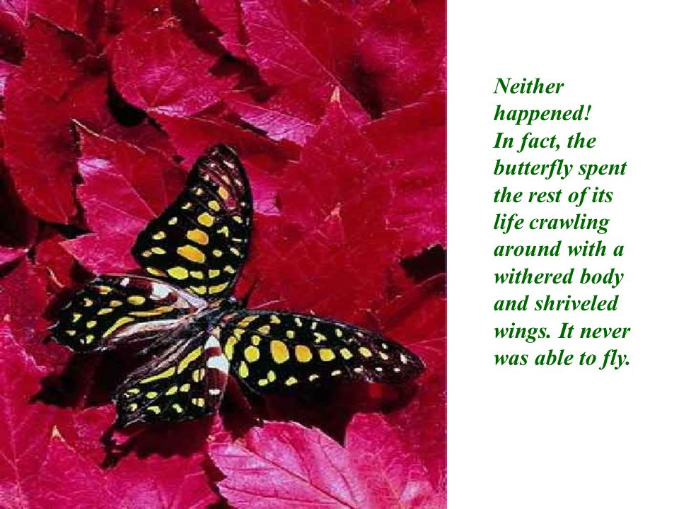 What the man, in his kindness and his goodwill did not understand was that the restricting cocoon and the struggle required for the butterfly to get through the tiny opening, were nature's way of forcing fluid from the body of the butterfly into its wings, so that it would be ready for flight once it achieved its freedom from the cocoon.