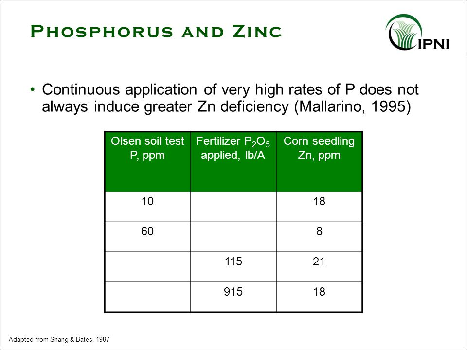 Continuous application of very high rates of P does not always induce greater Zn deficiency (Mallarino, 1995) Olsen soil test P, ppm Fertilizer P 2 O 5 applied, lb/A Corn seedling Zn, ppm 1018 608 11521 91518 Adapted from Shang & Bates, 1987 Phosphorus and Zinc
