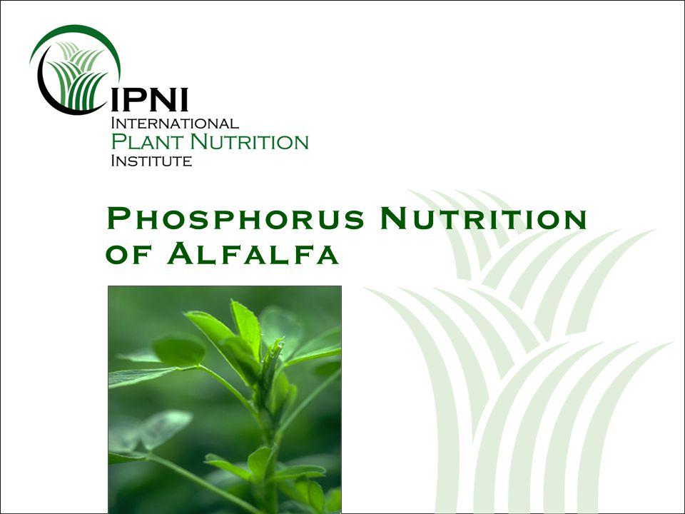 Phosphorus (P) Nutrition of Alfalfa U.S.