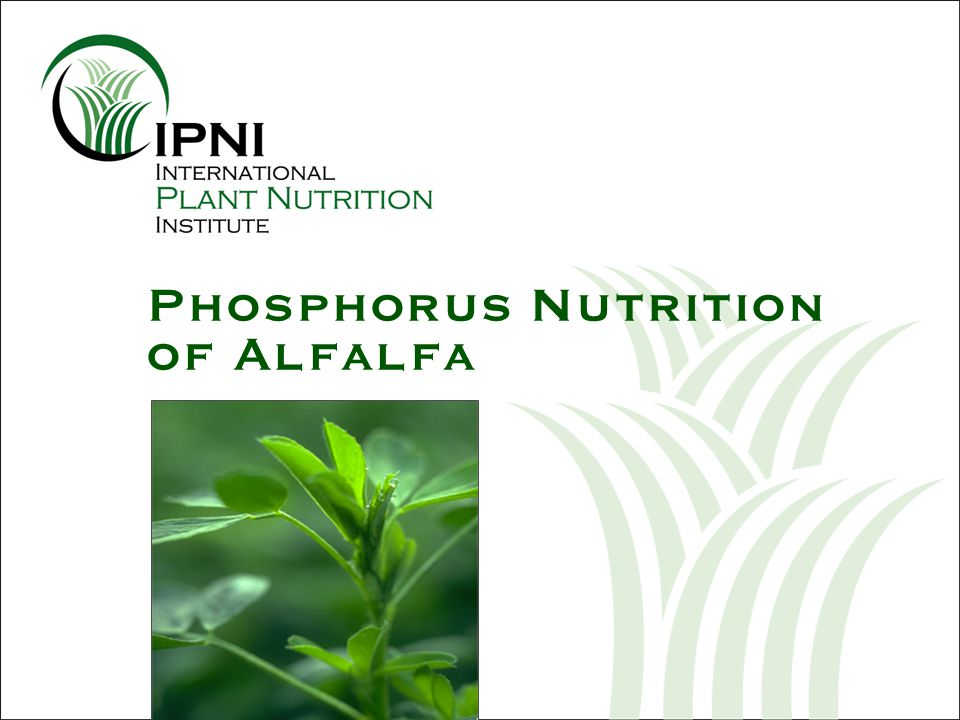 P Fertilization Increases Nodule Growth Gates, 1974 P application, lb P 2 O 5 /A Nodule dry weight, mg/plant
