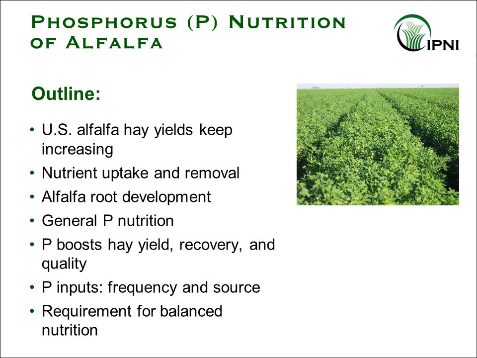 Summary- P Nutrition of Alfalfa Alfalfa roots grow best in nutrient-rich soil; Prepare the seedbed prior to planting and supplement in later years as needed Adequate P promotes vigorous N 2 fixation, shoot development, and faster regrowth after cutting Uptake of P continues through the season and is harvested in large amounts.