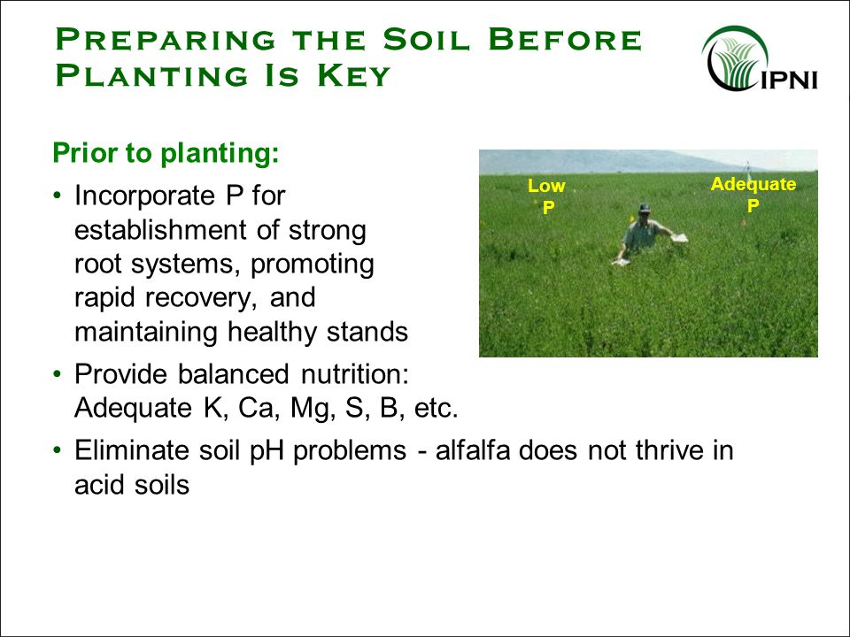 Prior to planting: Incorporate P for establishment of strong root systems, promoting rapid recovery, and maintaining healthy stands Provide balanced nutrition: Adequate K, Ca, Mg, S, B, etc.