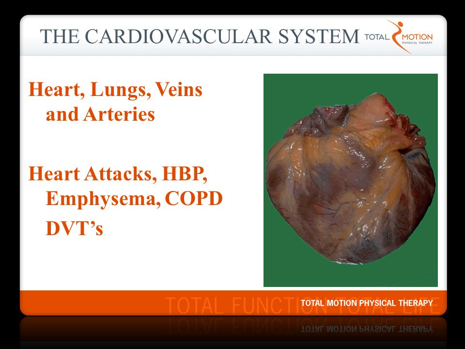 THE CARDIOVASCULAR SYSTEM Heart, Lungs, Veins and Arteries Heart Attacks, HBP, Emphysema, COPD DVT's
