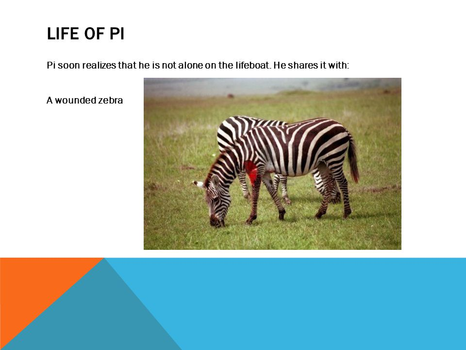 LIFE OF PI Pi soon realizes that he is not alone on the lifeboat. He shares it with: A wounded zebra