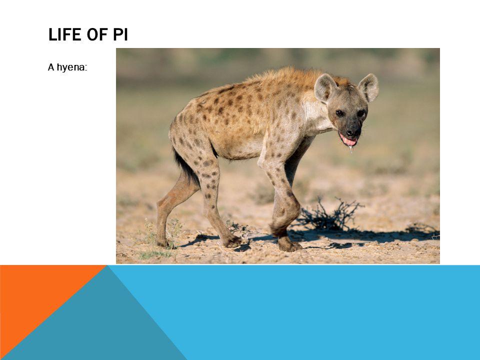 LIFE OF PI A hyena: