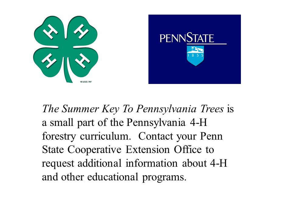The Summer Key To Pennsylvania Trees is a small part of the Pennsylvania 4-H forestry curriculum.