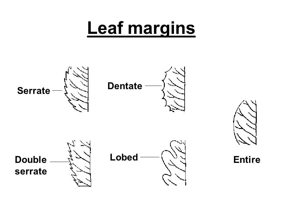 Leaf margins Dentate EntireDouble serrate Lobed Serrate