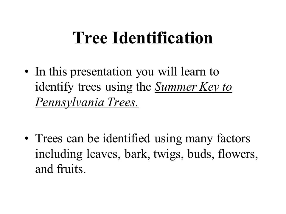 Tree Identification In this presentation you will learn to identify trees using the Summer Key to Pennsylvania Trees.