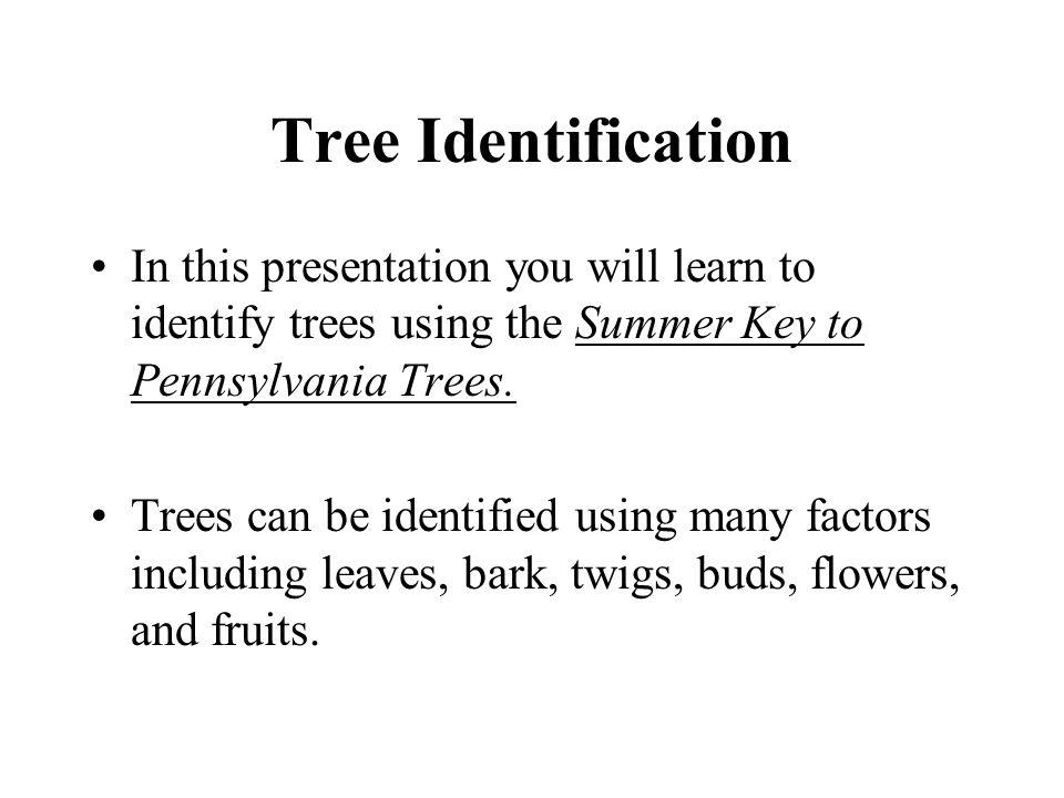 White Oak Quercus alba