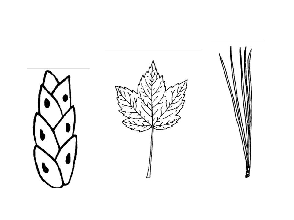 Leaf-type Comparison