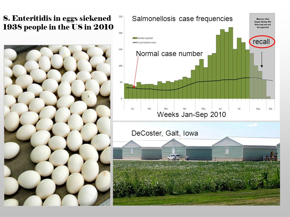 S. Enteritidis in eggs sickened 1938 people in the US in 2010 Salmonellosis case frequencies Weeks Jan-Sep 2010 Normal case number DeCoster, Galt, Iow