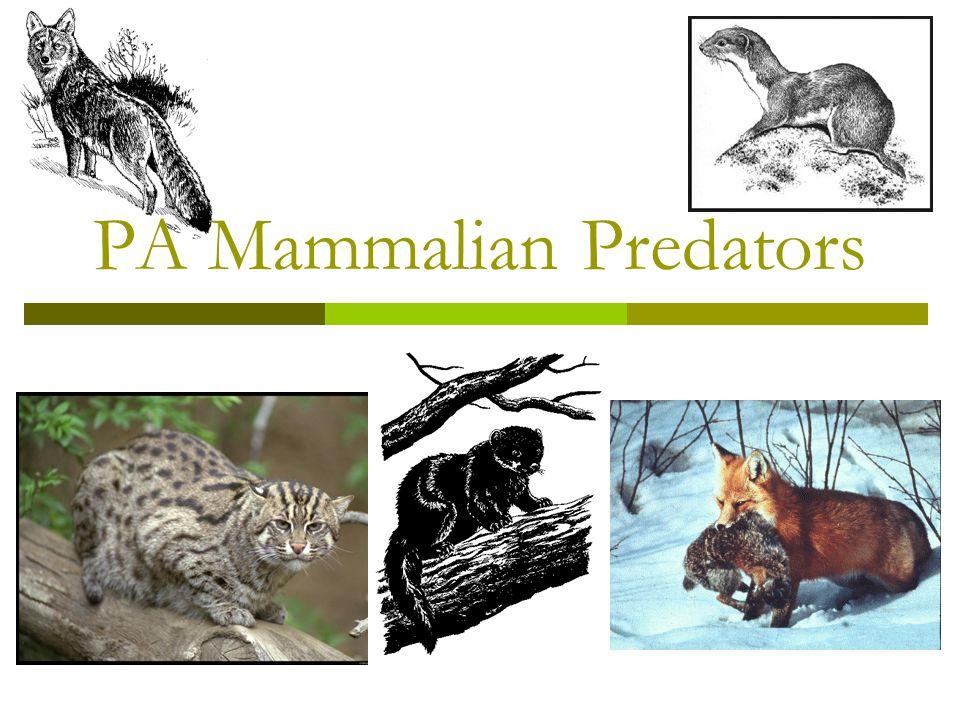 PA Mammalian Predators