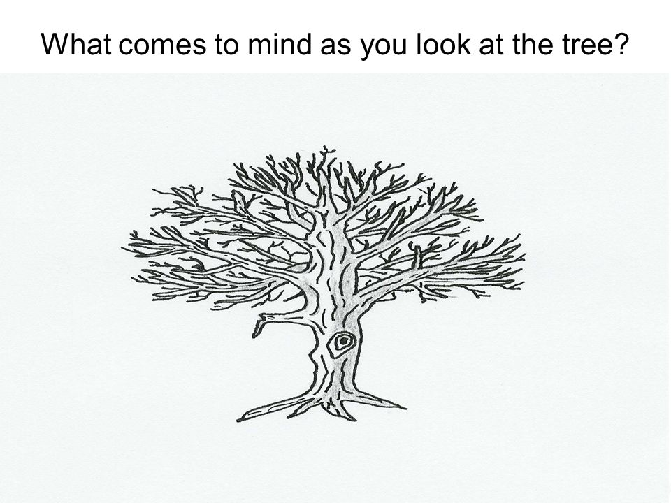 What comes to mind as you look at the tree?