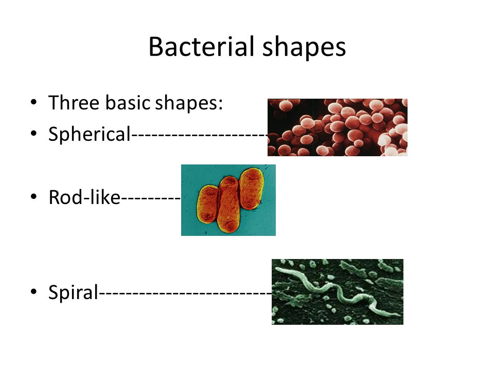 Sizes of bacteria Vary greatly The biggest is about the size of a period at the end of a 12-font size.