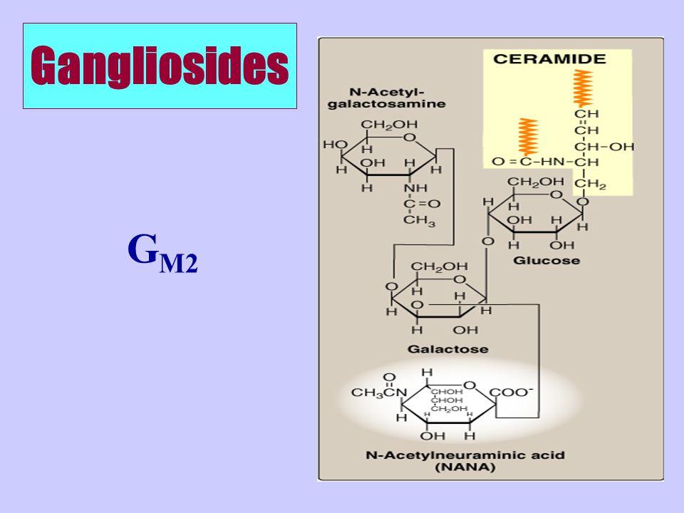 Gangliosides G M2