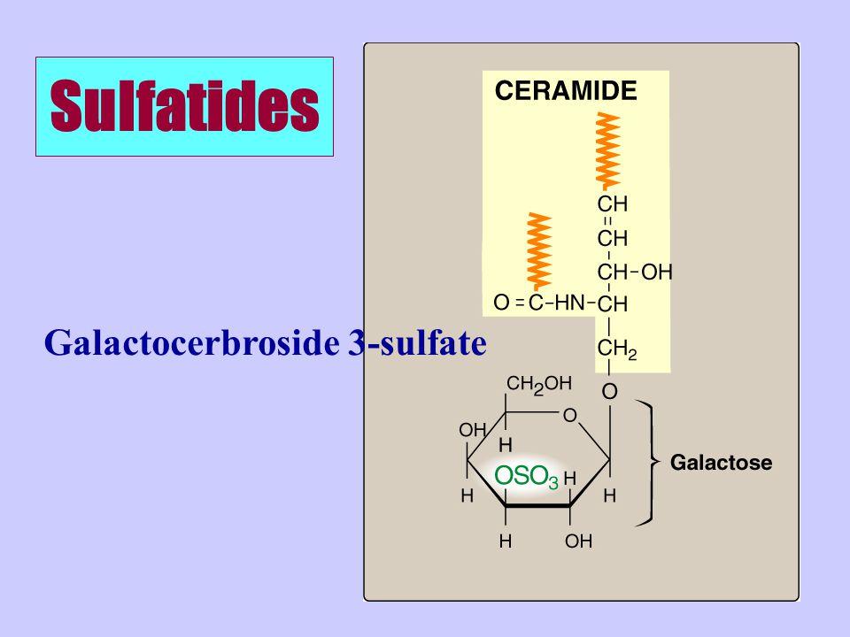 Sulfatides Galactocerbroside 3-sulfate