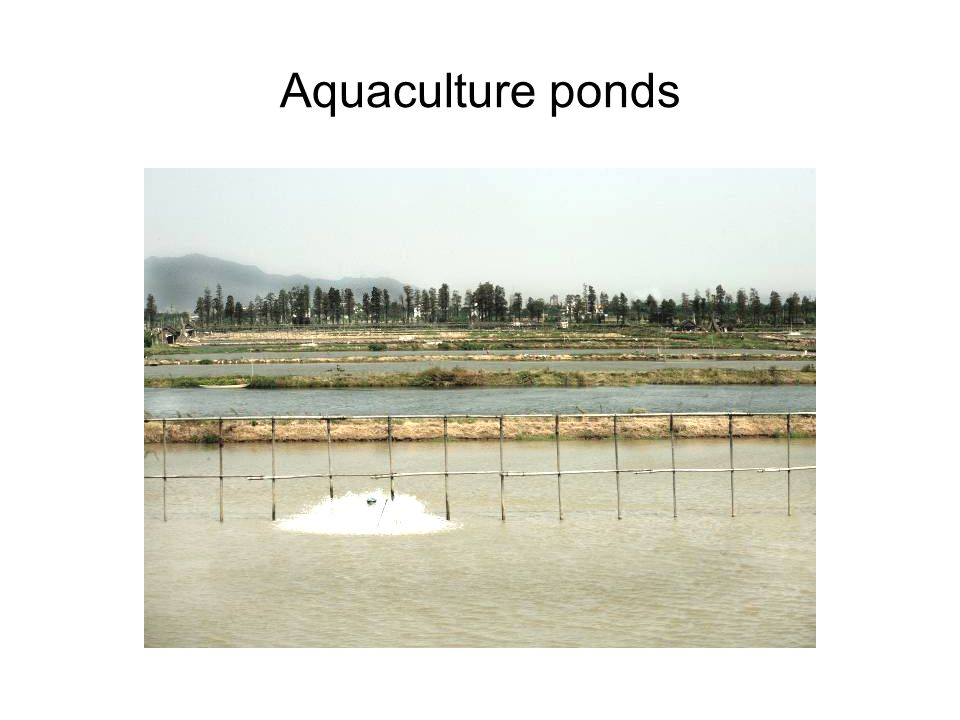 Aquaculture ponds