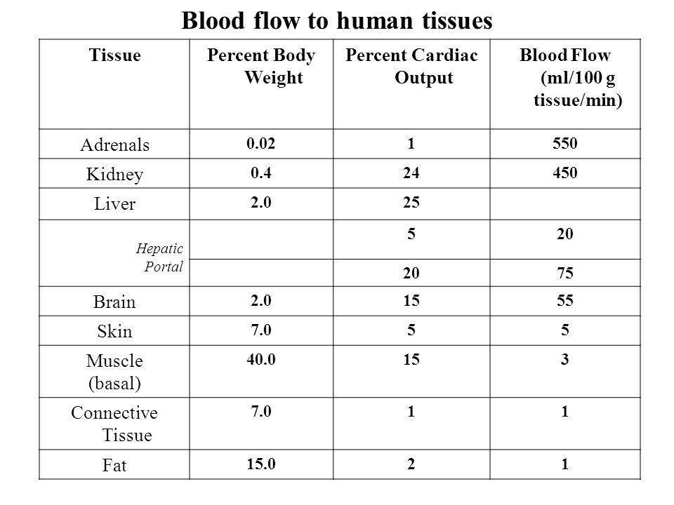 Blood flow to human tissues TissuePercent Body Weight Percent Cardiac Output Blood Flow (ml/100 g tissue/min) Adrenals 0.021550 Kidney 0.424450 Liver