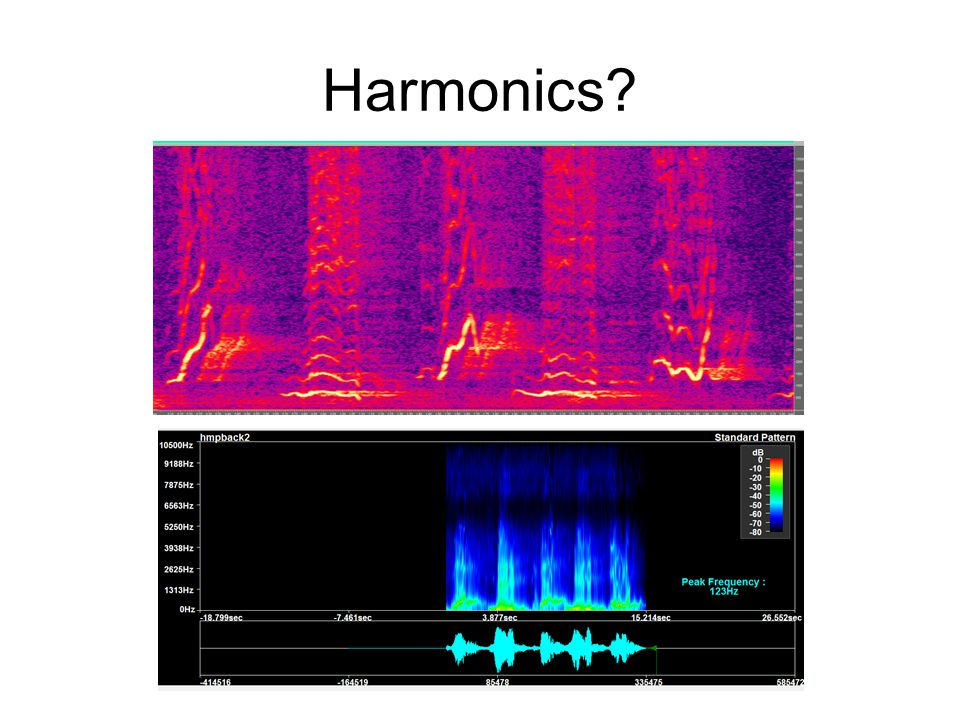 Harmonics in Bio-Acoustics These are mostly artefacts of the FFT (also known as the Harmonic Transform).