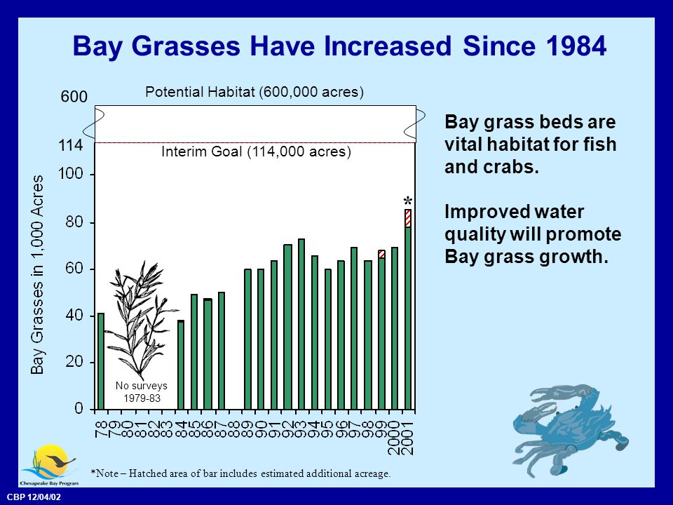 CBP 12/04/02 Bay Grasses Have Increased Since 1984 Bay grass beds are vital habitat for fish and crabs.