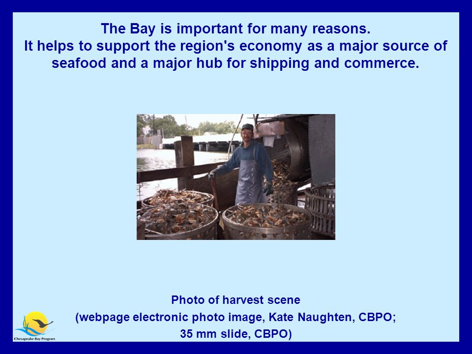 The Bay is Economically Important Photo of harvest scene (webpage electronic photo image, Kate Naughten, CBPO; 35 mm slide, CBPO) The Bay is important for many reasons.