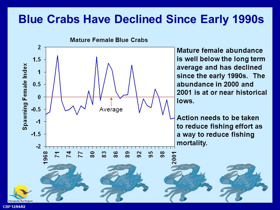 CBP 12/04/02 Blue Crabs Have Declined Since Early 1990s Mature female abundance is well below the long term average and has declined since the early 1990s.
