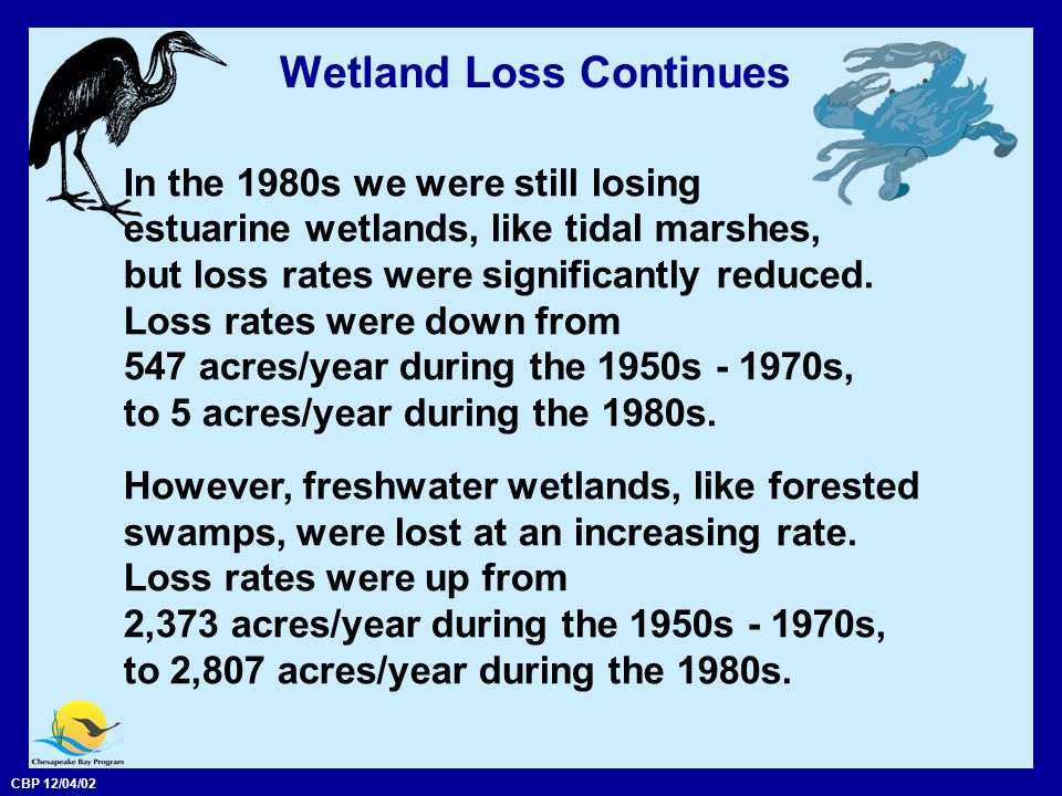 CBP 12/04/02 Wetland Loss Continues In the 1980s we were still losing estuarine wetlands, like tidal marshes, but loss rates were significantly reduced.