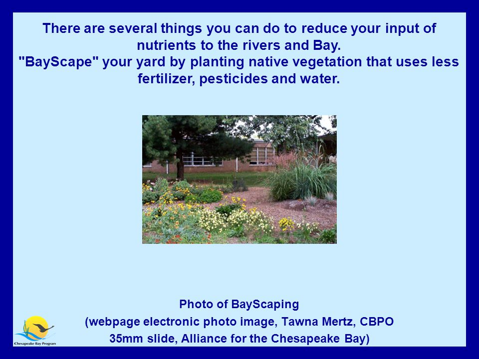 BayScape Your Yard Photo of BayScaping (webpage electronic photo image, Tawna Mertz, CBPO 35mm slide, Alliance for the Chesapeake Bay) There are several things you can do to reduce your input of nutrients to the rivers and Bay.