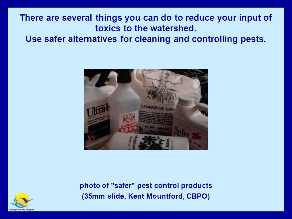 Use safer alternatives for cleaning and controlling pests photo of safer pest control products (35mm slide, Kent Mountford, CBPO) There are several things you can do to reduce your input of toxics to the watershed.
