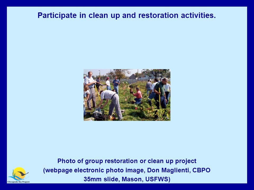 Participate in clean up and restoration activities Photo of group restoration or clean up project (webpage electronic photo image, Don Maglienti, CBPO 35mm slide, Mason, USFWS) Participate in clean up and restoration activities.