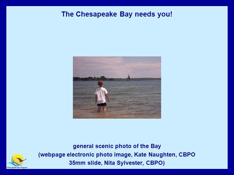 Chesapeake Bay Needs YOU.