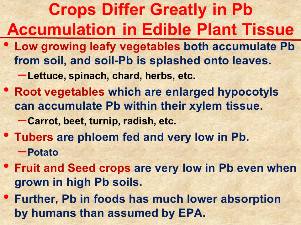 Crops Differ Greatly in Pb Accumulation in Edible Plant Tissue Low growing leafy vegetables both accumulate Pb from soil, and soil-Pb is splashed onto leaves.