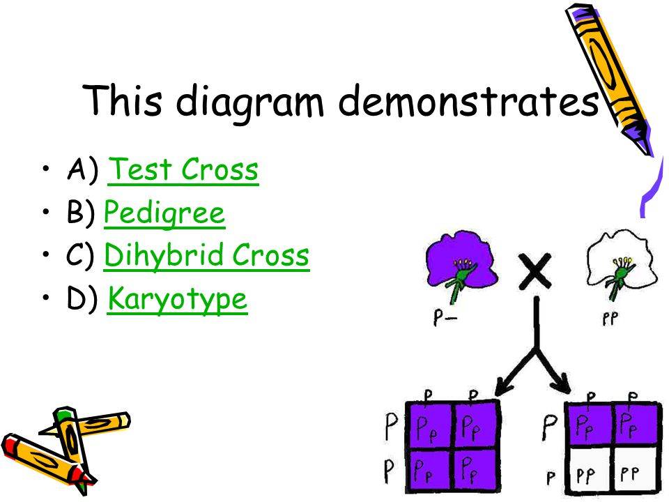 This diagram demonstrates A) Test CrossTest Cross B) PedigreePedigree C) Dihybrid CrossDihybrid Cross D) KaryotypeKaryotype