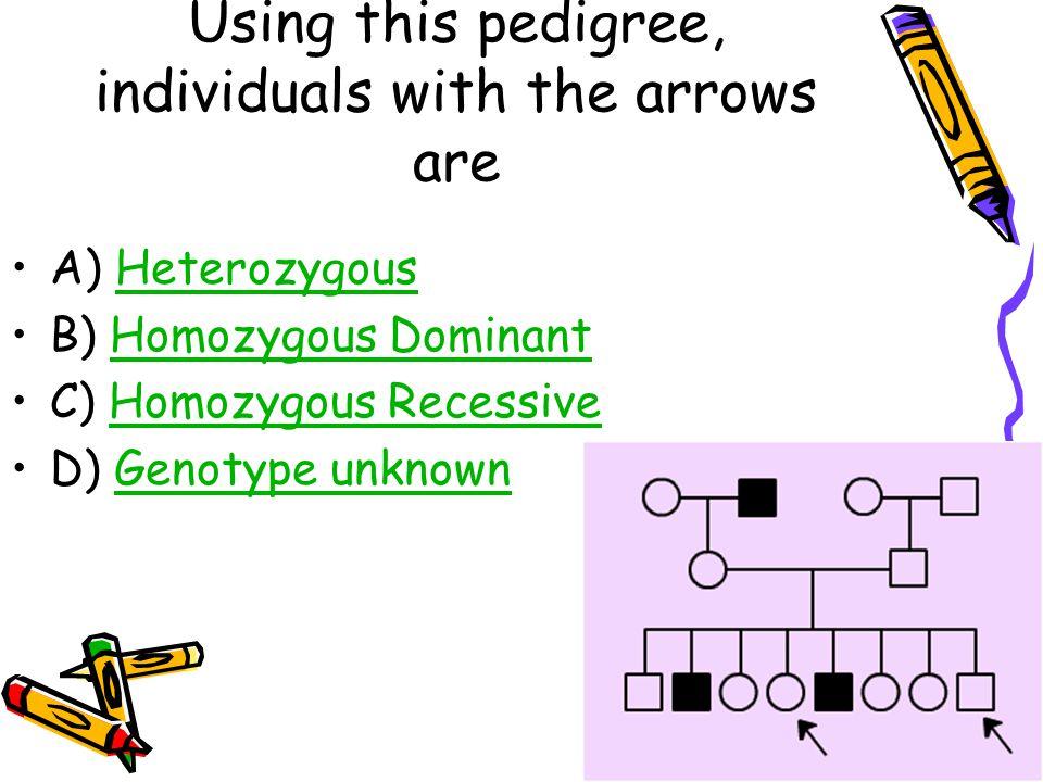 Using this pedigree, individuals with the arrows are A) HeterozygousHeterozygous B) Homozygous DominantHomozygous Dominant C) Homozygous RecessiveHomozygous Recessive D) Genotype unknownGenotype unknown