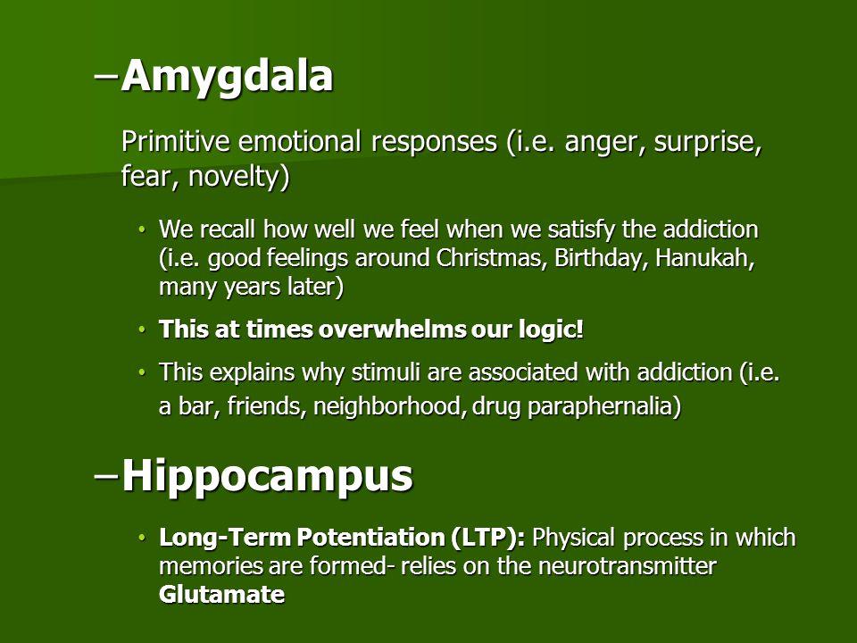 –Amygdala Primitive emotional responses (i.e.