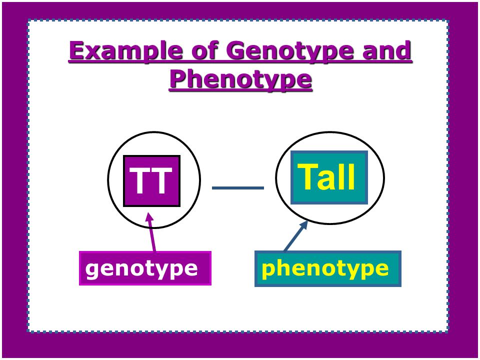 Where do Phenotypes come from?