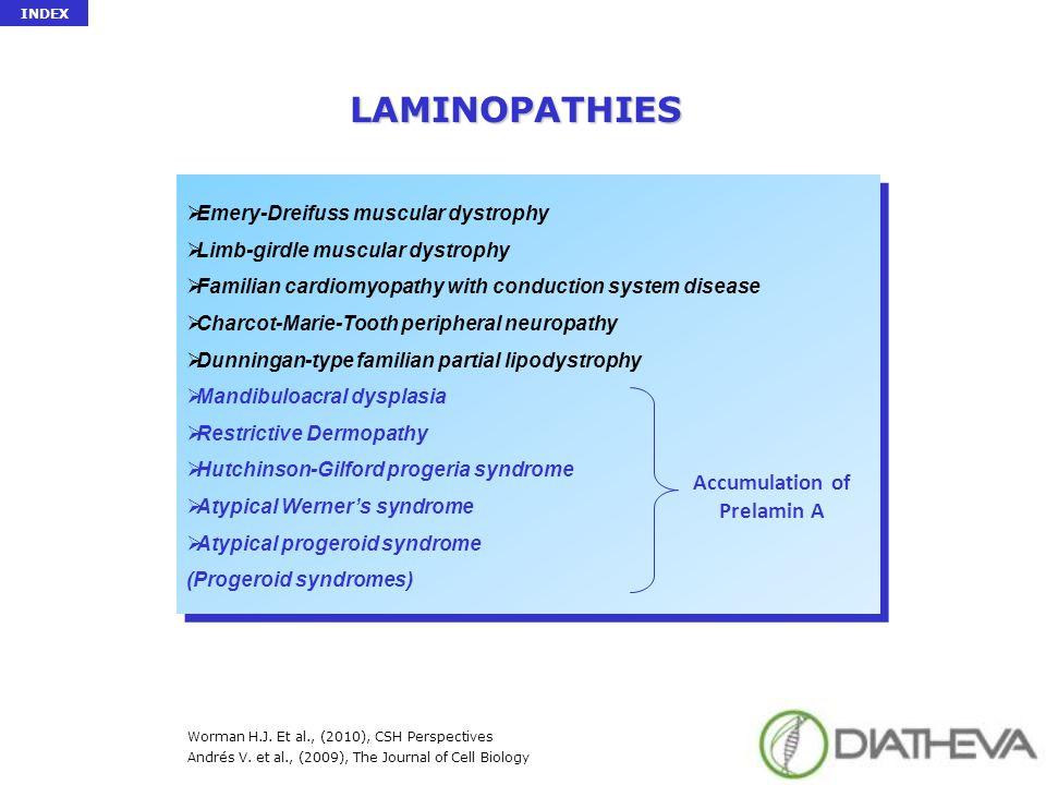 LAMINOPATHIES  Emery-Dreifuss muscular dystrophy  Limb-girdle muscular dystrophy  Familian cardiomyopathy with conduction system disease  Charcot-
