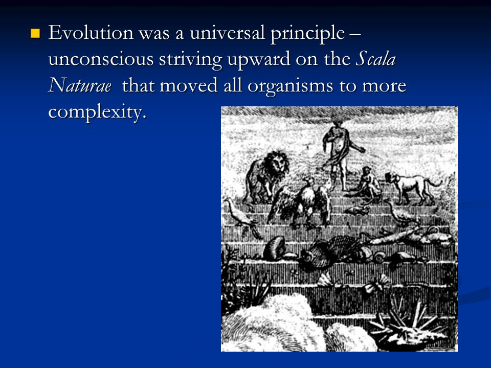 Evolution was a universal principle – unconscious striving upward on the Scala Naturae that moved all organisms to more complexity. Evolution was a un