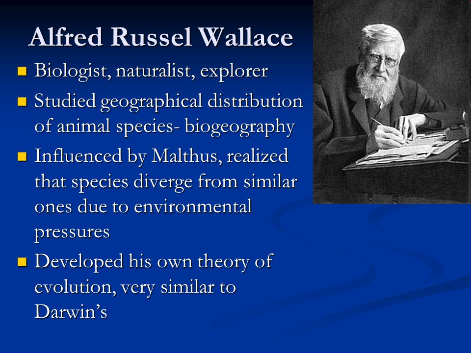Alfred Russel Wallace Biologist, naturalist, explorer Biologist, naturalist, explorer Studied geographical distribution of animal species- biogeograph