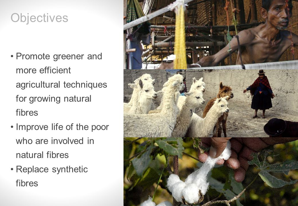 Slide 4 Promote greener and more efficient agricultural techniques for growing natural fibres Improve life of the poor who are involved in natural fibres Replace synthetic fibres Objectives
