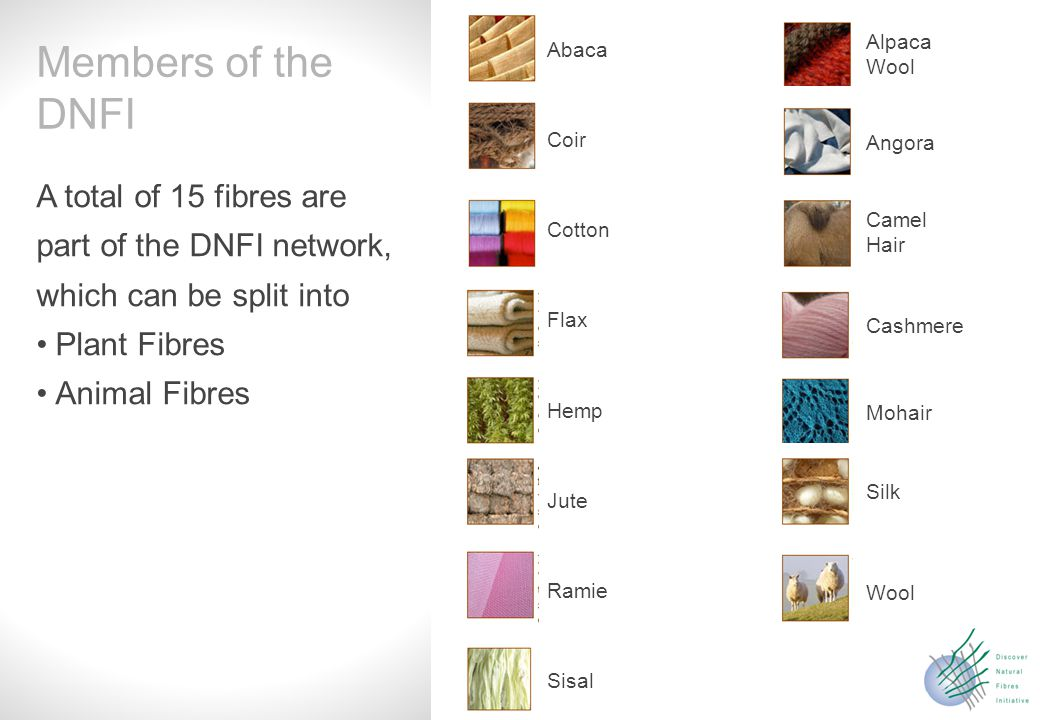Slide 5 A total of 15 fibres are part of the DNFI network, which can be split into Plant Fibres Animal Fibres Members of the DNFI Sisal Ramie Jute Hemp Flax Coir Cotton Abaca Wool Silk Mohair Cashmere Angora Camel Hair Alpaca Wool