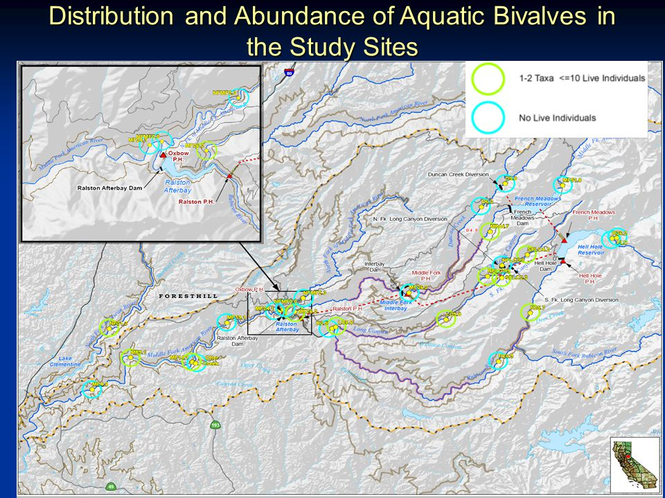 8 Distribution and Abundance of Aquatic Bivalves in the Study Sites
