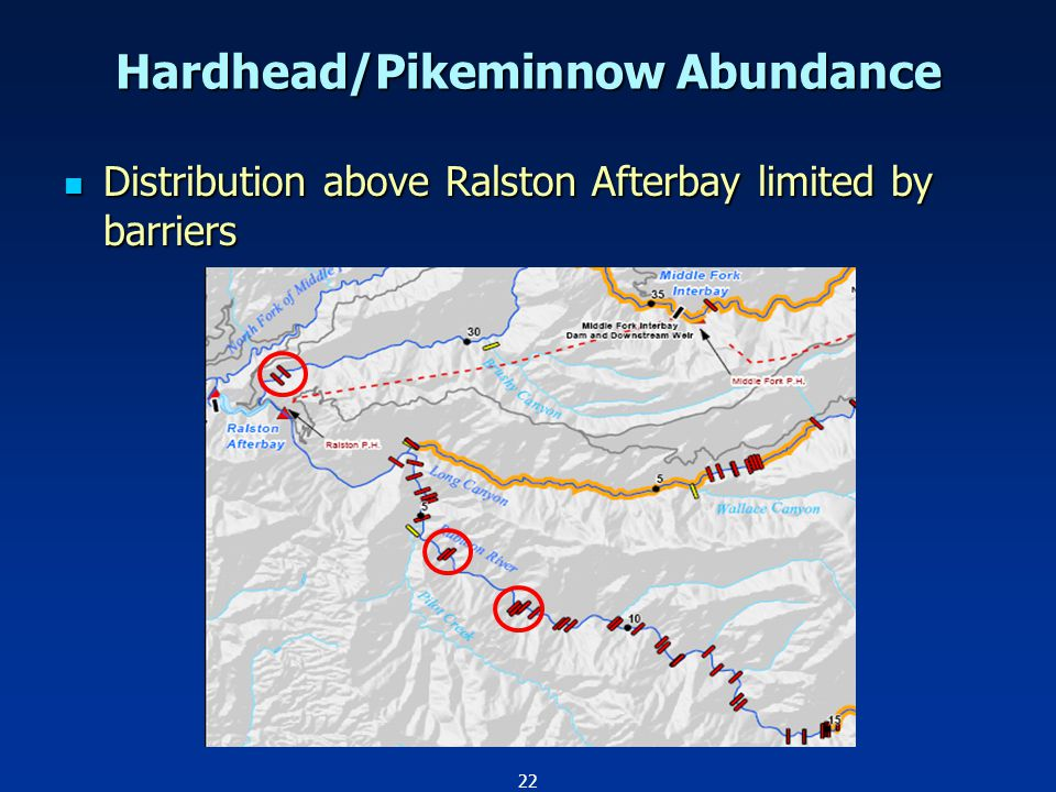 22 Hardhead/Pikeminnow Abundance Distribution above Ralston Afterbay limited by barriers Distribution above Ralston Afterbay limited by barriers