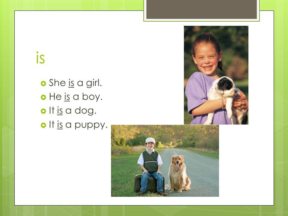 is  She is a girl.  He is a boy.  It is a dog.  It is a puppy.