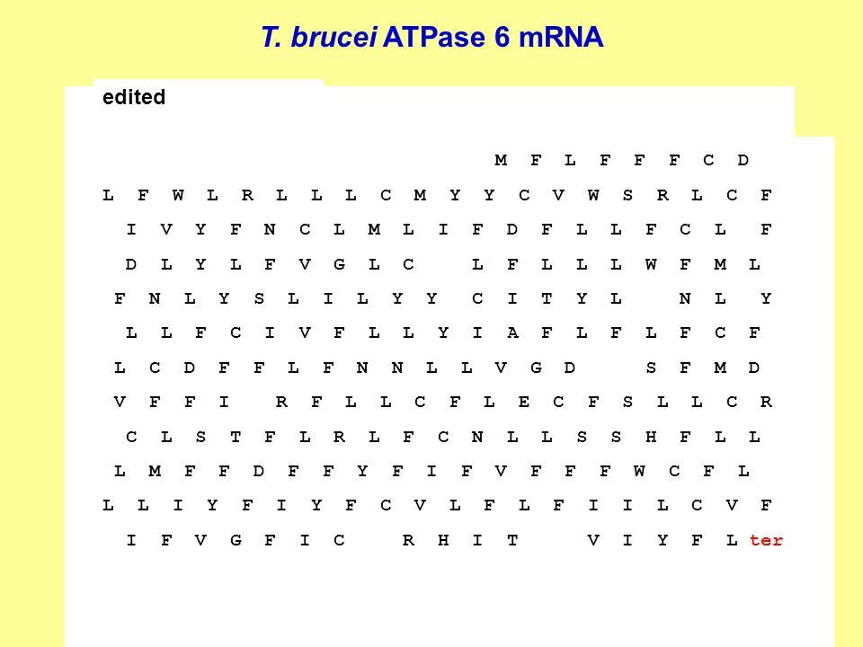 T. brucei ATPase 6 mRNA AAAAAUAAGUAUUUUGAUAUUAUUAAAGUAAAAGAGGAAUUUUGGGCGGAAGAGAAGG AGACAGGAGAGGAAAUGAAGGAGAAAGGUUUUGAGAGGGGGGUUUUUUGAGGGGAGGA AAAAGAAU