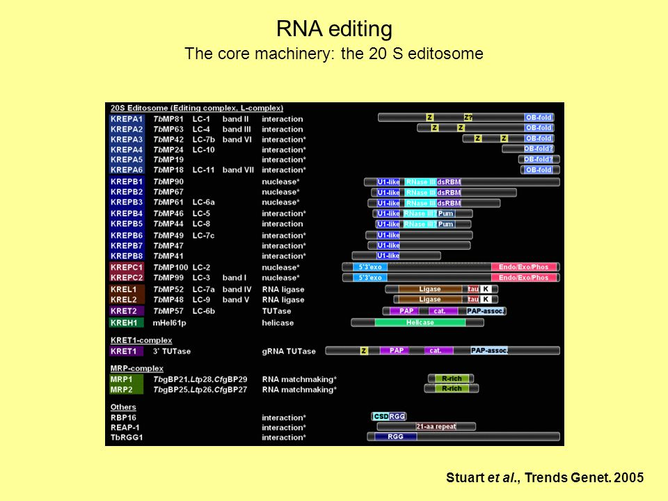 RNA editing The core machinery: the 20 S editosome Stuart et al., Trends Genet. 2005