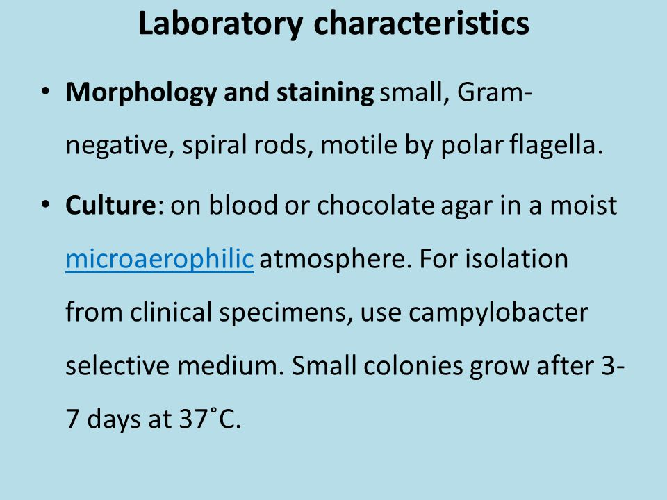 Laboratory characteristics Morphology and staining small, Gram- negative, spiral rods, motile by polar flagella. Culture: on blood or chocolate agar i