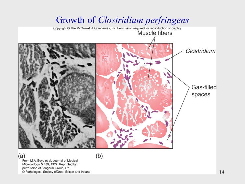 Growth of Clostridium perfringens 14