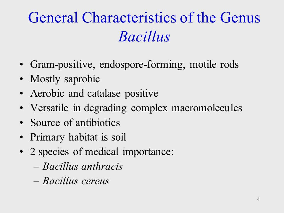 4 General Characteristics of the Genus Bacillus Gram-positive, endospore-forming, motile rods Mostly saprobic Aerobic and catalase positive Versatile