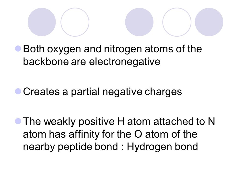 Both oxygen and nitrogen atoms of the backbone are electronegative Creates a partial negative charges The weakly positive H atom attached to N atom ha